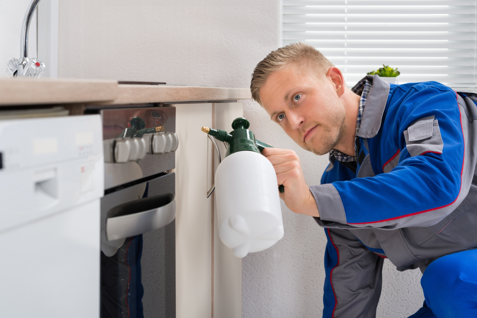 Pest Inspection, Pest Control in Barnes, Castelnau, SW13. Call Now 020 8166 9746